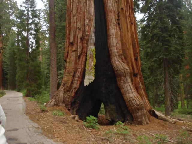 Yosemite-Wawona 2009 170