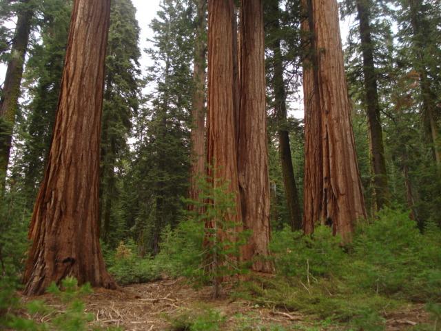 Yosemite-Wawona 2009 108