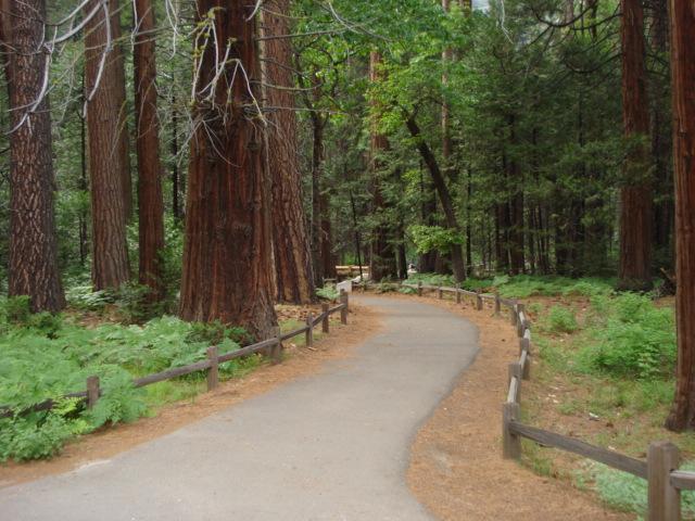 Yosemite Ca 2009 134