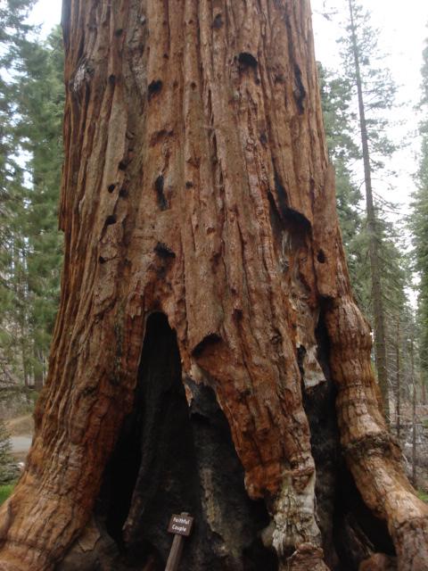 Yosemite-Wawona 2009 046