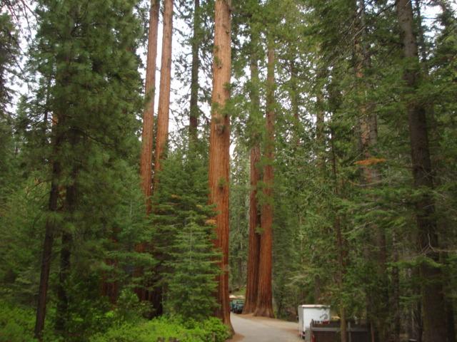 Yosemite-Wawona 2009 197