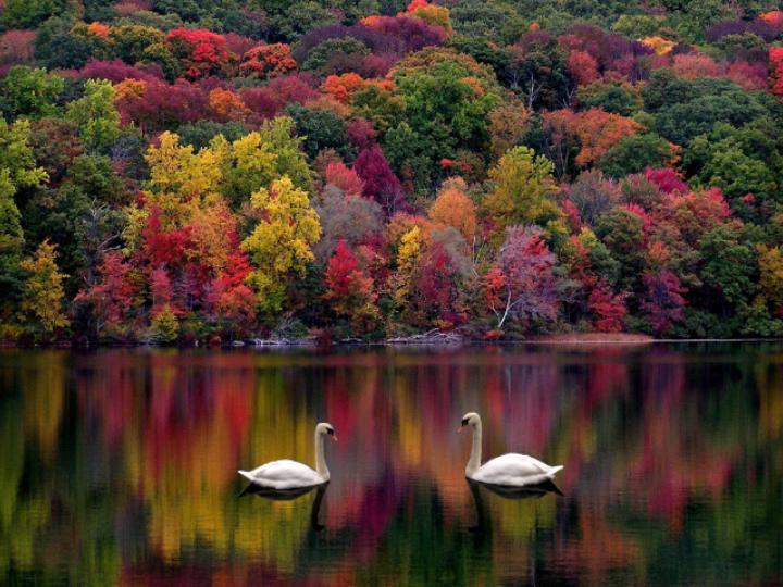 Lake w swans