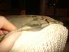 Pillow_003